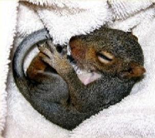 Warm%20Squirrel_edited.jpg