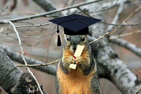 Squirrel Education.png