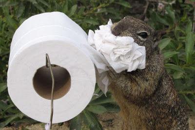 Squirrel Potty.jpg