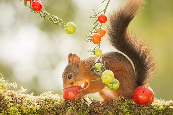 Safe fruits and veggies for squirrels.jp