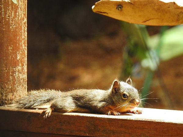 Sunbathing Squirrel.jpg