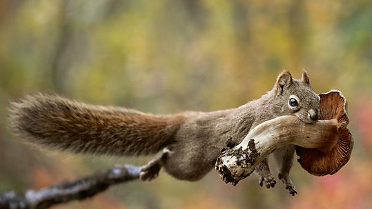 Squirrel with Mushroom.jpg