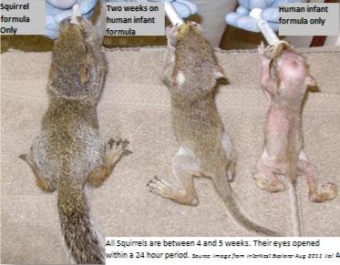 Squirrels%20fed%20human%20formula_edited