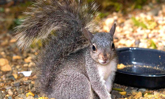 how%20to%20care%20for%20adult%20squirrel