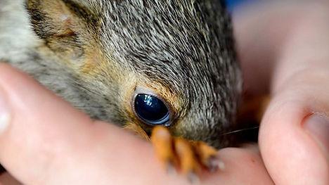 Squirrel Support.jpg