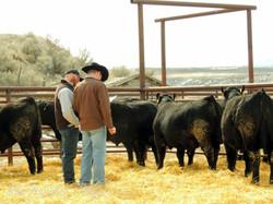Leadore Bull Sale 2