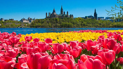 Canadian-Tulip-Festival1.jpg