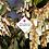 Thumbnail: Pieris japonica 'Mountain Fire'