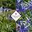 Thumbnail: Eryngium x zabelii 'Big Blue'