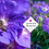 Thumbnail: Geranium 'Rozanne'