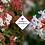 Thumbnail: Abelia x grandiflora