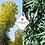 Thumbnail: Euphorbia characais 'Wulfenii'