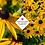 Thumbnail: Rudbeckia fulgida var. sullivantii 'Goldsturm'
