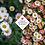 Thumbnail: Erigeron karvinskianus 'Profusion'