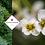 Thumbnail: Crambe cordifolia