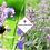 Thumbnail: Nepeta grandiflora
