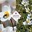 Thumbnail: Japanese Anemone