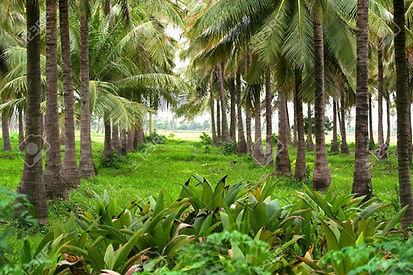 Coconut Oil Supplier