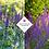 Thumbnail: Salvia nemorosa 'Caradonna'