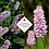 Thumbnail: Persicaria bistorta subsp. Carnea