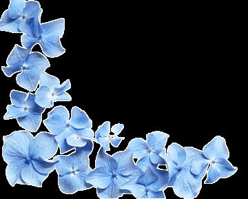 png-transparent-hd-blue-flower-petals-bl