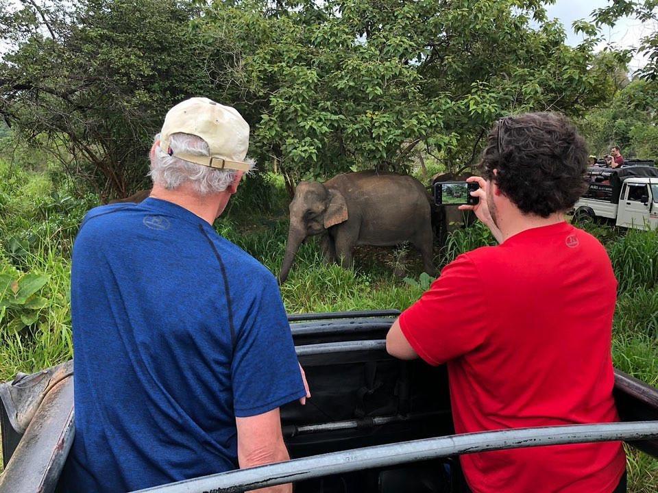 Elephants on the Safari