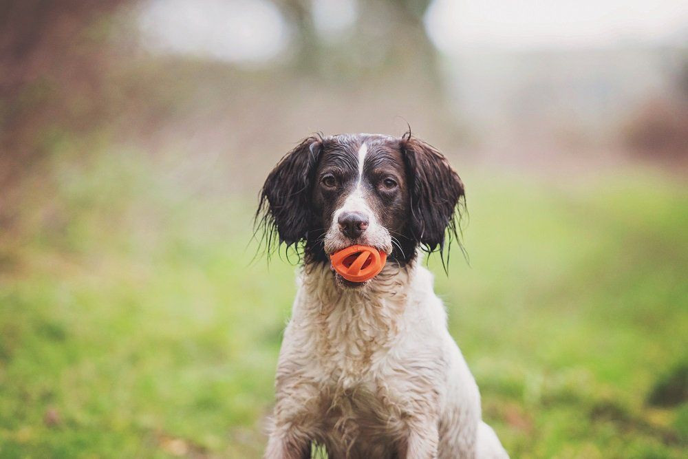 """Bola pra Cachorro- """"Por que a qualidade dos fornecedores é essencial na hora de comprar produtos para pet shop?- Braspets"""