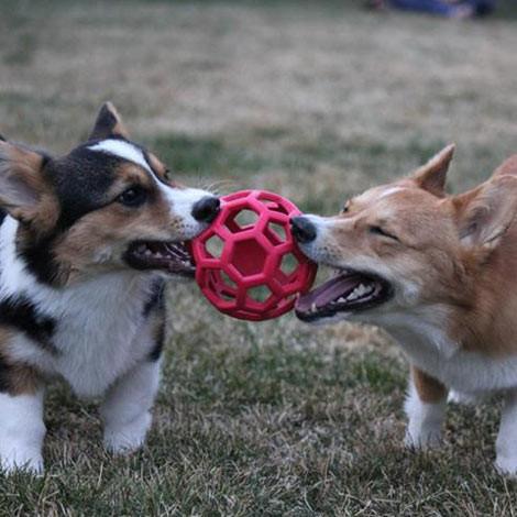 """Brinquedo Cachorro- """"Por que a qualidade dos fornecedores é essencial na hora de comprar produtos para pet shop?""""- Braspets"""