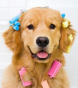 """GROOMING- """"Produtos essenciais de banho e tosa que você precisa ter no seu pet shop """"- BRASPETS"""