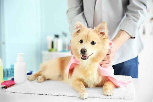 """Banho e Tosa- """"Verão: quais os cuidados que devemos ter com os pets nessa época do ano?""""-Braspets"""