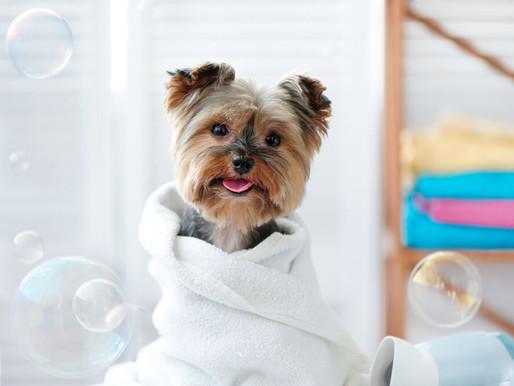 Cuidados que você deve ter na hora de comprar produtos de perfumaria para o seu pet