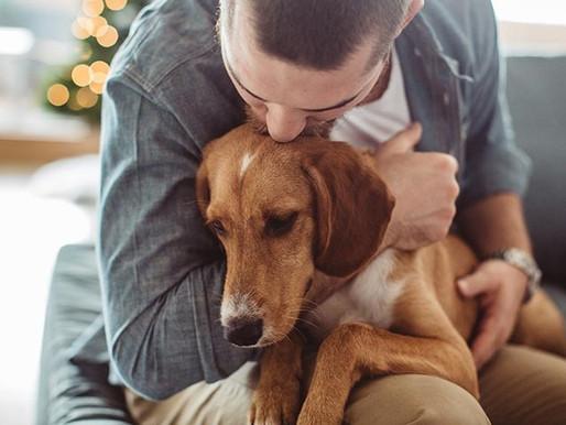 Cachorros e fogos de artifícios: como acalmar o pet nesse momento?