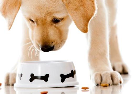 Pet Food: tudo o que você precisa saber sobre esse segmento do mercado pet