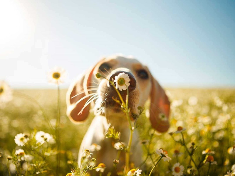 cachorro fofo em um jardim de flores