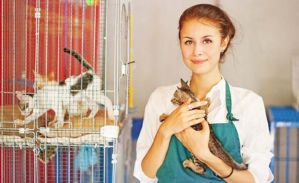 """PETSHOP- """"Fatores que você precisa levar em consideração na hora de abrir um pet shop""""- BRASPETS"""