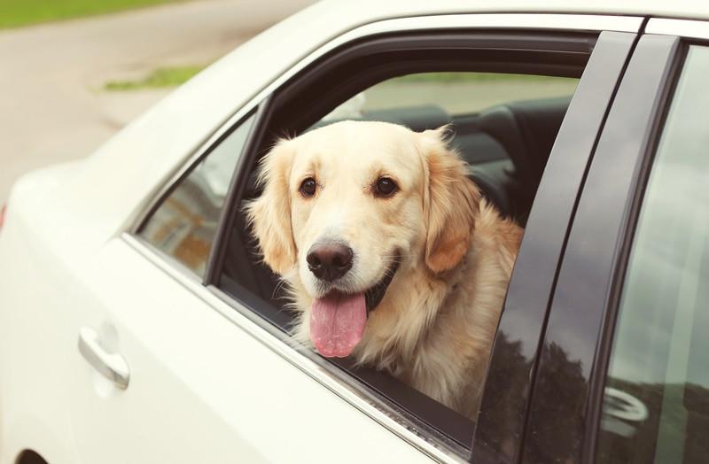 """DOG TAXI- """"Fatores que você precisa levar em consideração na hora de abrir um pet shop""""- BRASPETS"""
