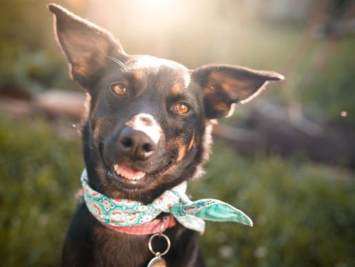 8 mitos e verdades sobre os cachorros que você precisa conhecer