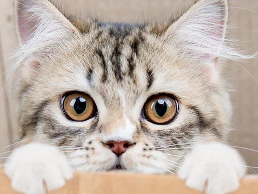 Conheça 6 produtos essenciais para quem tem gatos