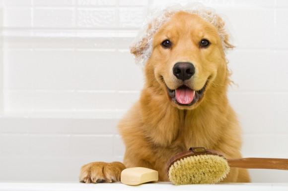 cachorro tomando banho e tosa petshop
