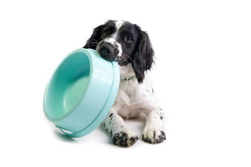 """Cachorro e comedouro- """"Descubra como a qualidade do comedouro impacta na saúde do seu pet""""- Braspets"""
