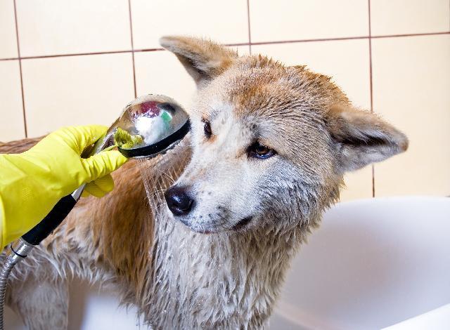 """Cachorro tomando Banho- """"Verão: quais os cuidados que devemos ter com os pets nessa época do ano?""""-Braspets"""