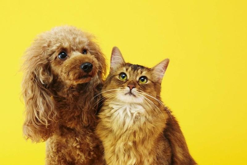 """Cachorro e Gato- """"Mercado pet e os produtos sustentáveis: conheça um pouco mais sobre essa tendência""""- Braspets"""