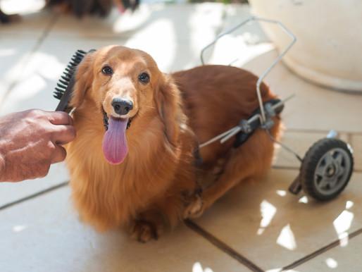 Dicas para escolher a escova ideal para a pelagem do seu cachorro