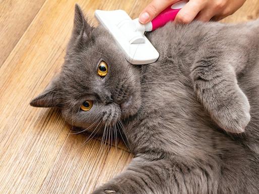 Conheça as formas mais corretas de escovar o pelo do seu pet