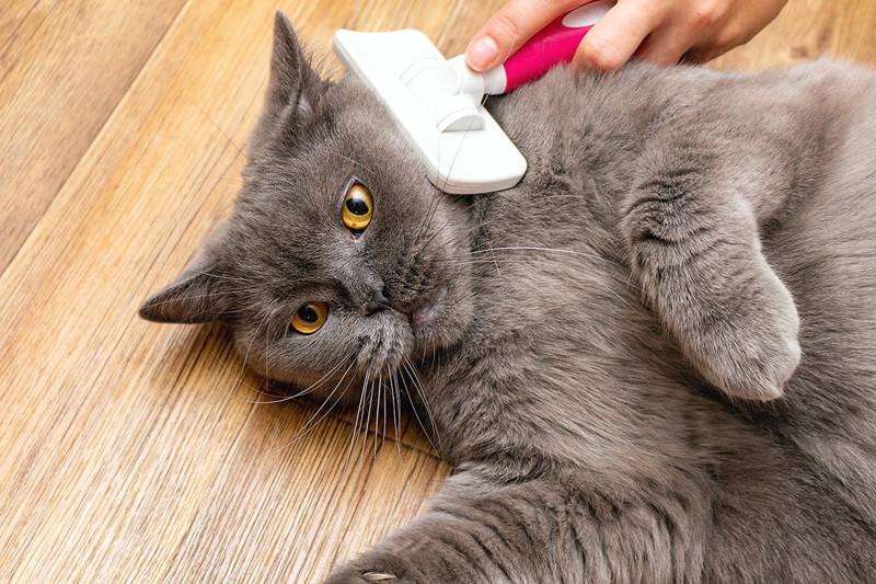 """Grooming- """"Conheça as formas mais corretas de escovar o pelo do seu pet""""- Braspets"""