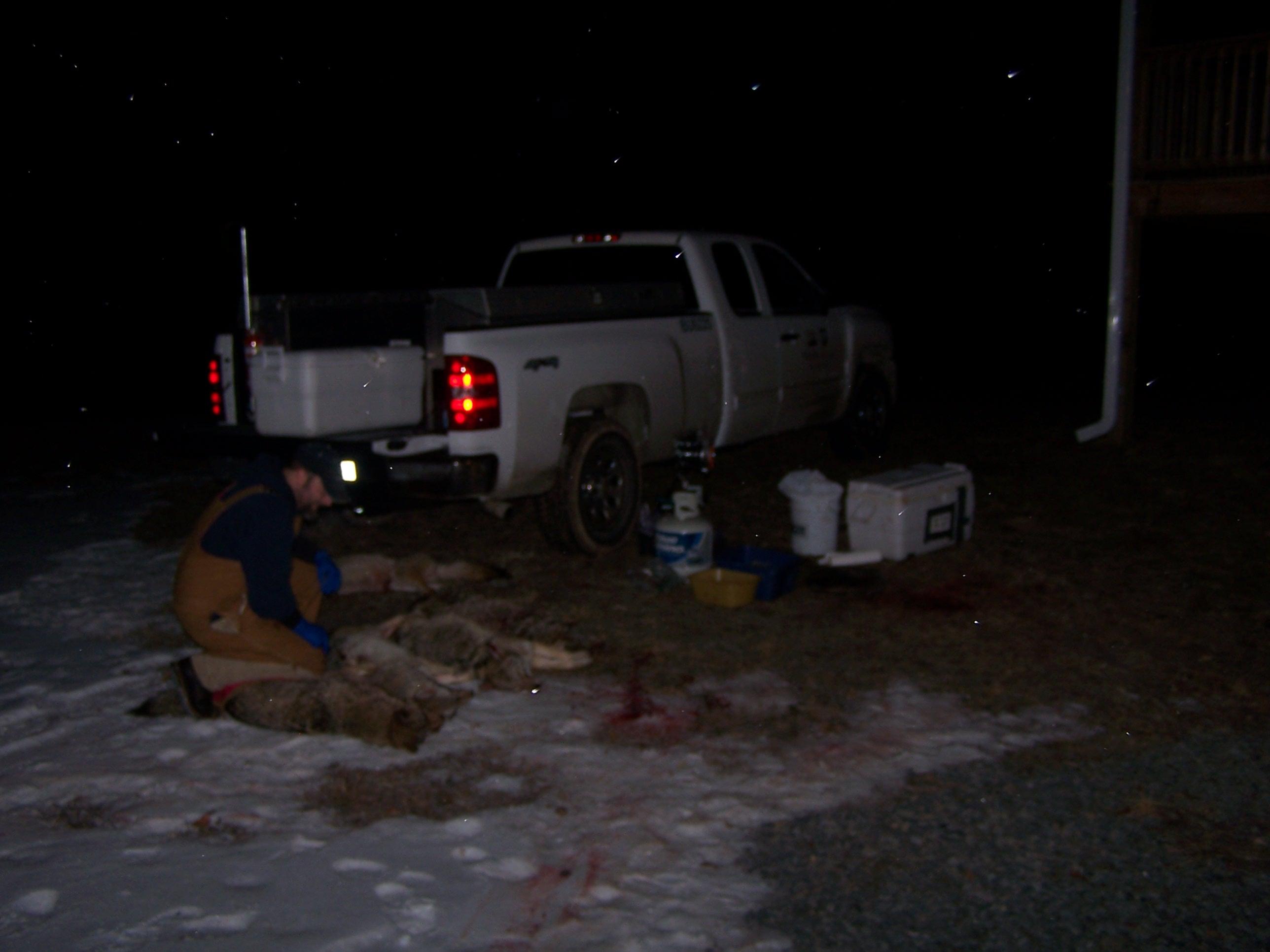 Biologist, Kyle Van Why- Coyote Hunt
