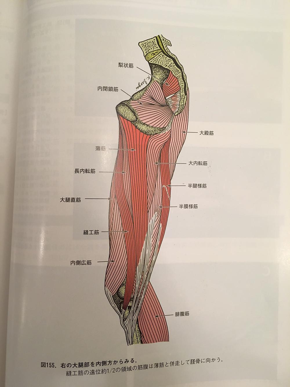 膝 の 内側 曲げる と 痛い