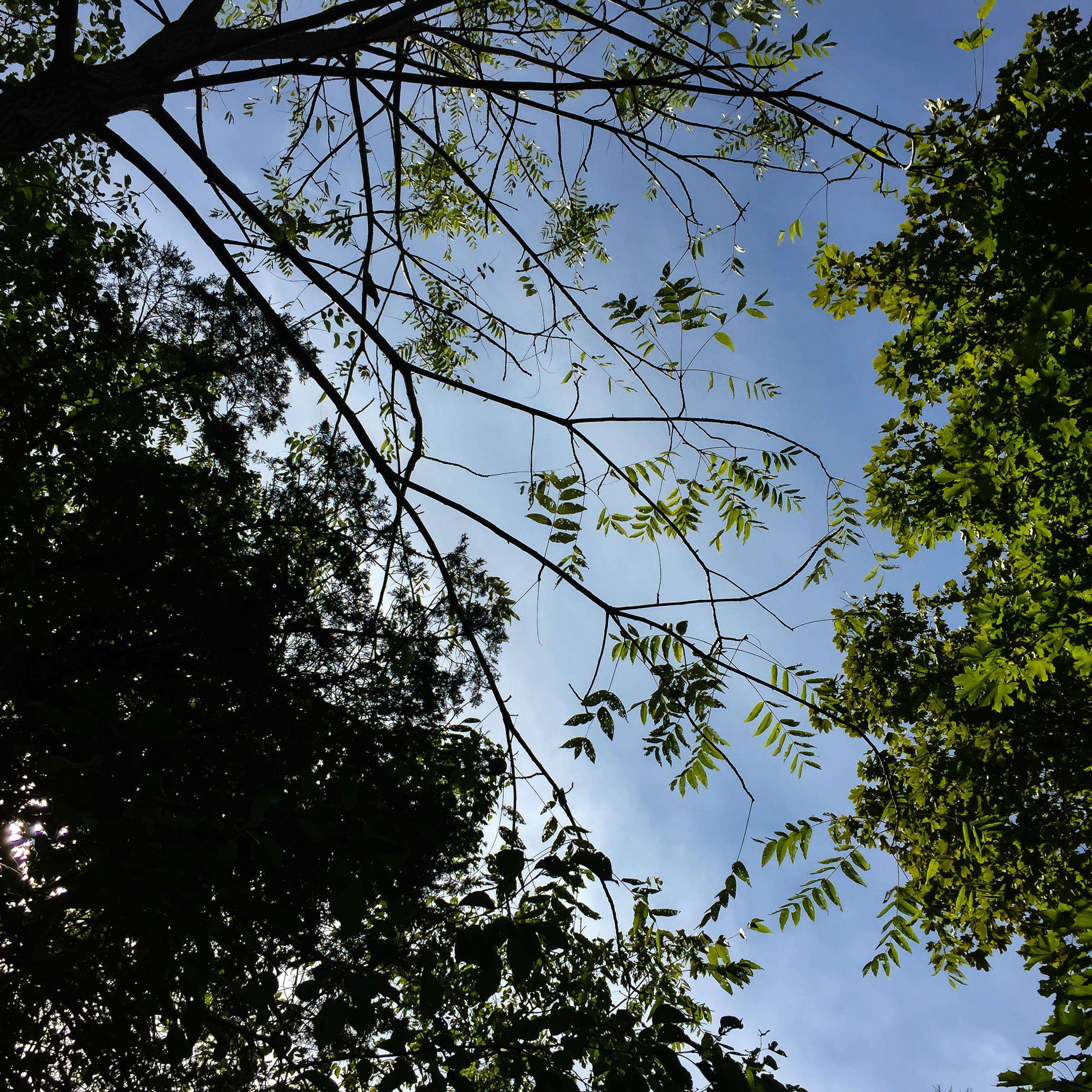 September Trees -2