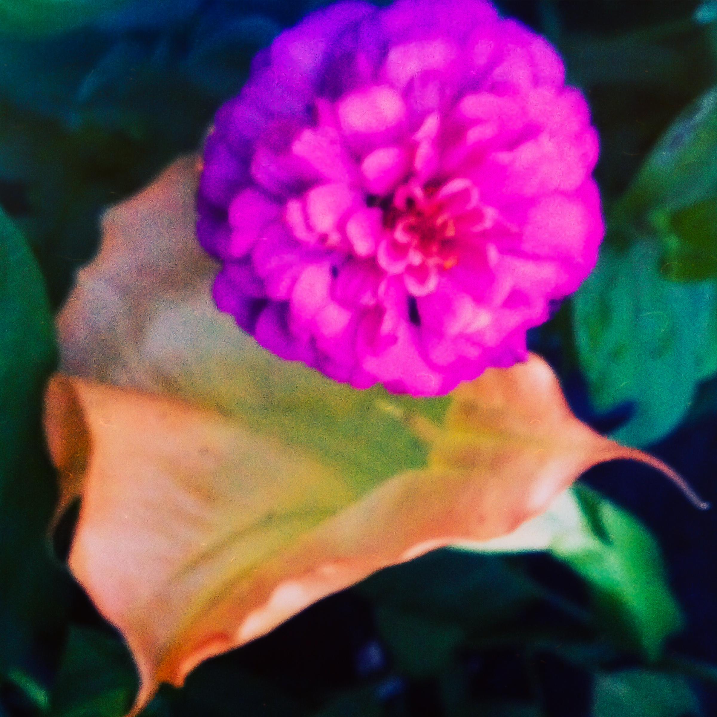 Garden Flowers-4