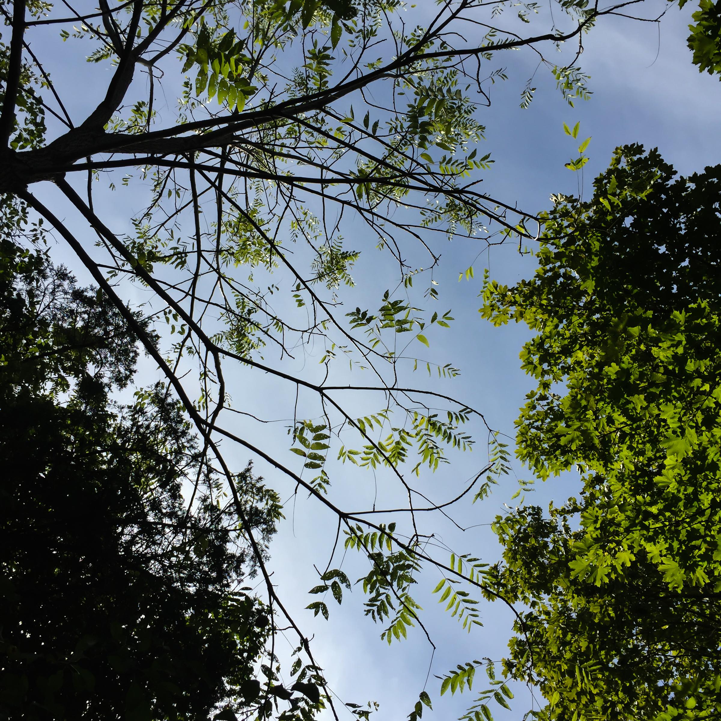 September Trees -1
